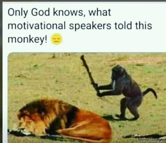 Only god knows what motivational speakers told this monkey meme