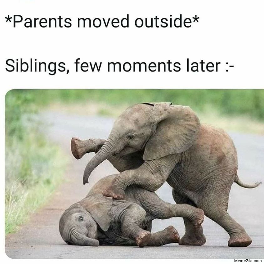 Parents moved outside Siblings few moments later meme