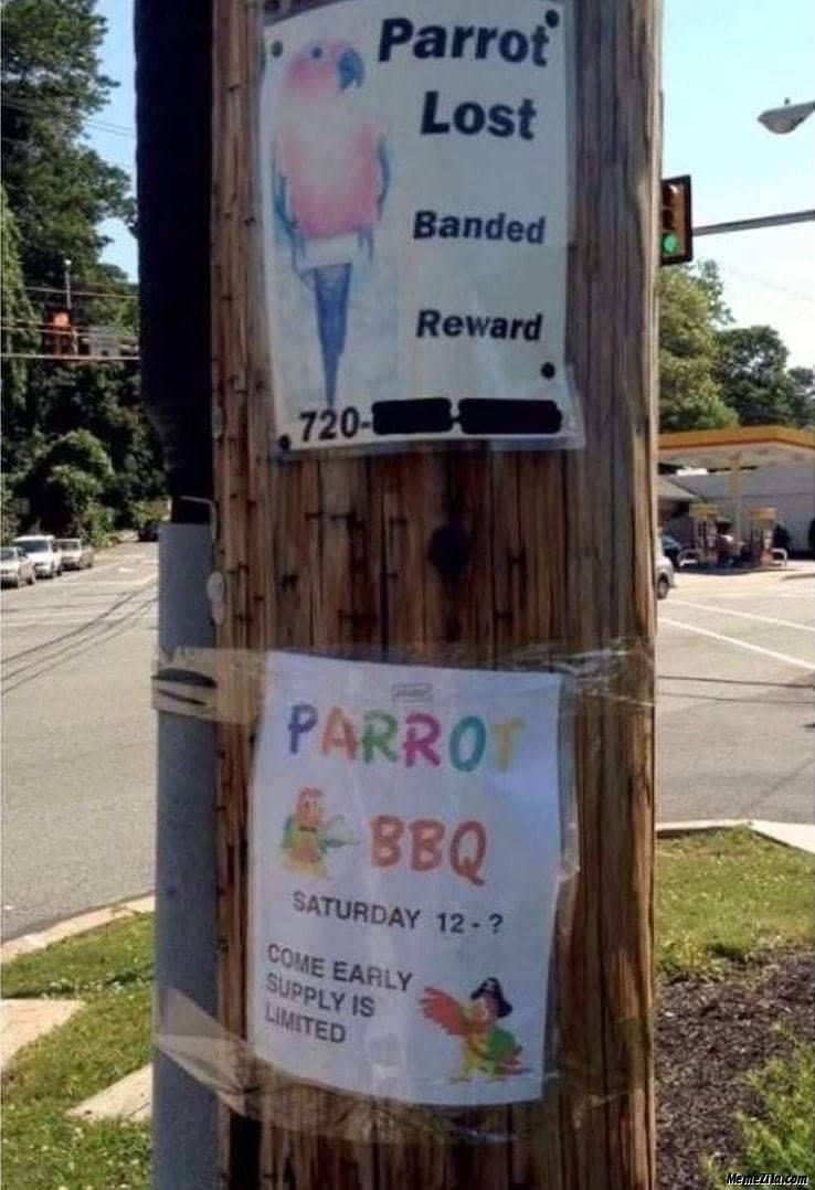 Parrot lost vs Parrot bbq barbeque meme