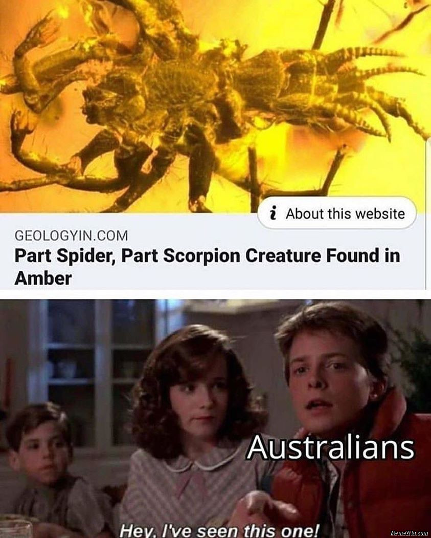 Part spider part scorpion creature found in amber Australians I have seen this one meme