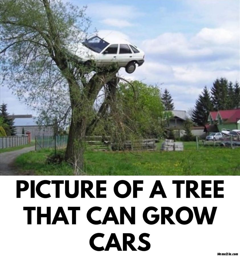 Picture of a tree that can grow cars meme