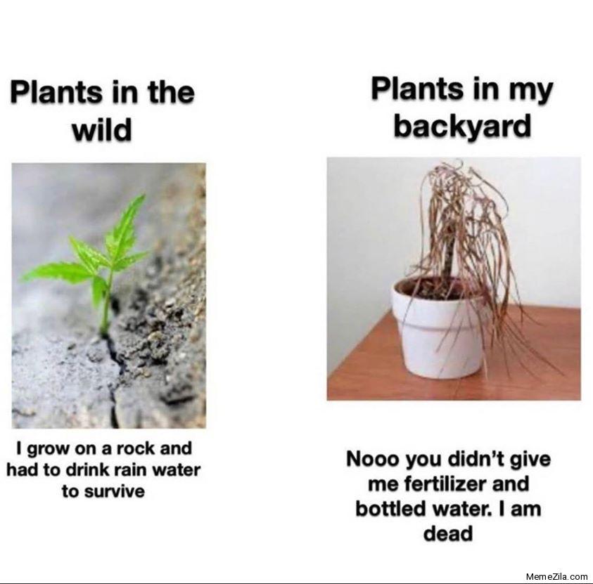 Plants in the wild vs Plants in the backyard meme