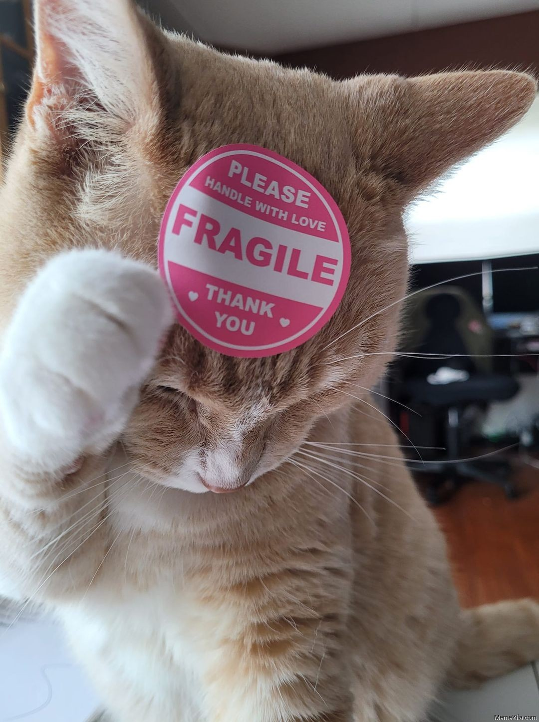 Please handle with care Fragile Thank you meme