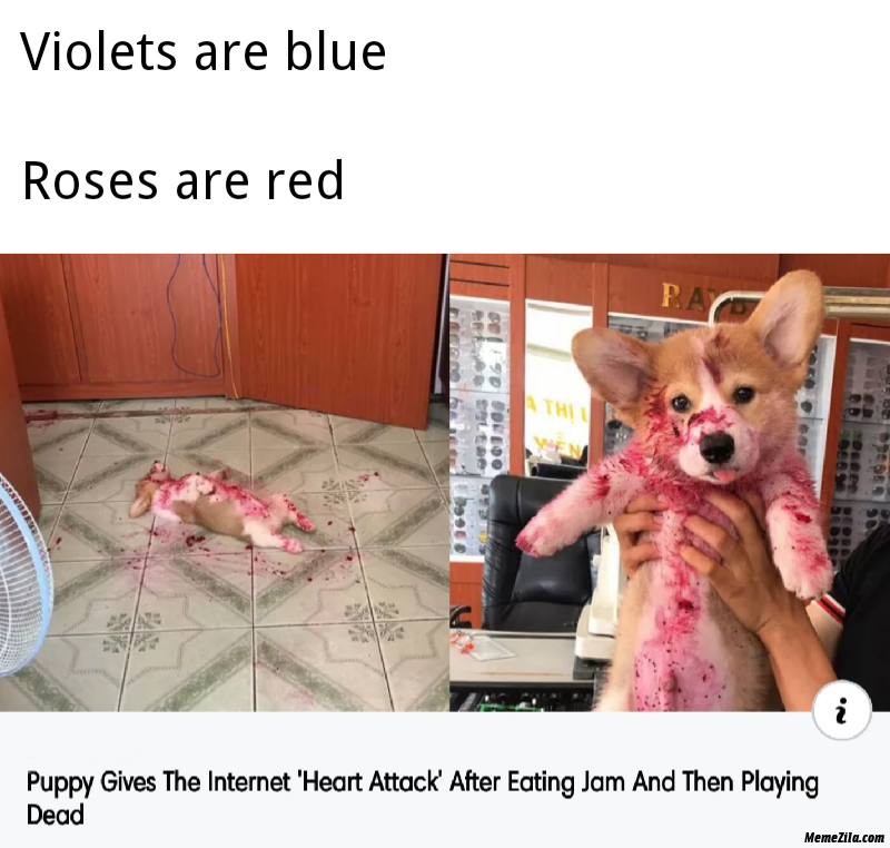 Puppy gives the internet heart attack after eating jam and then playing dead meme