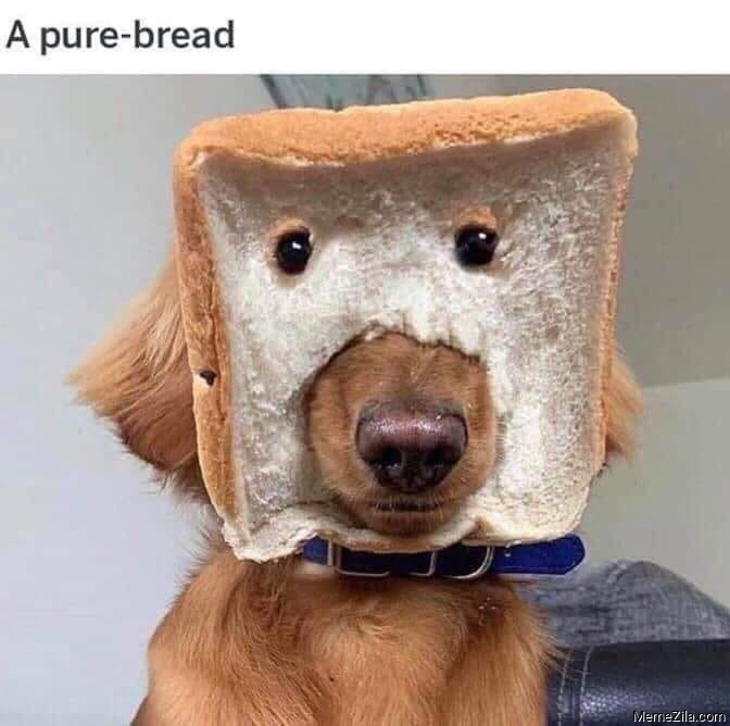 Pure bread dog meme