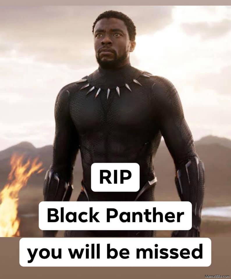 RIP Black Panther You will be missed meme