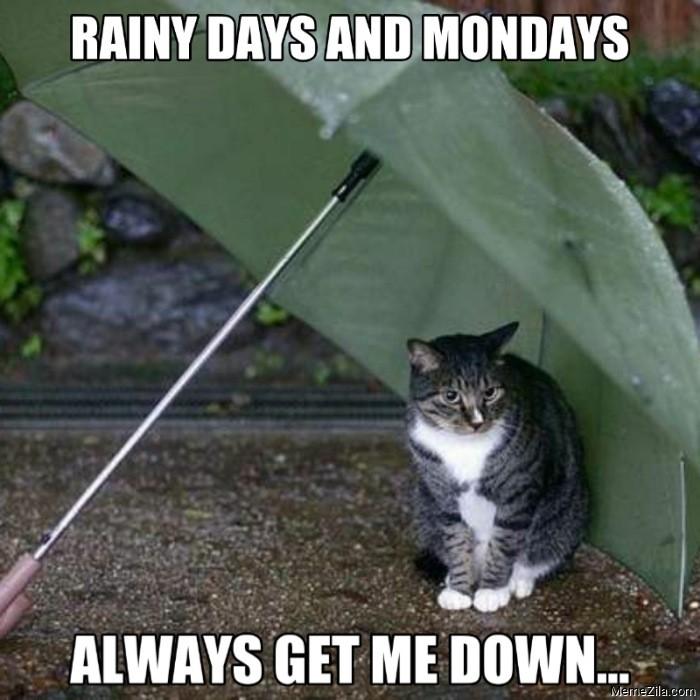 Rainy days and mondays always get me down cat meme