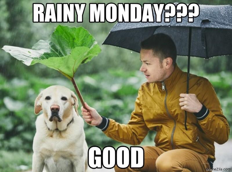 Rainy monday good dog meme