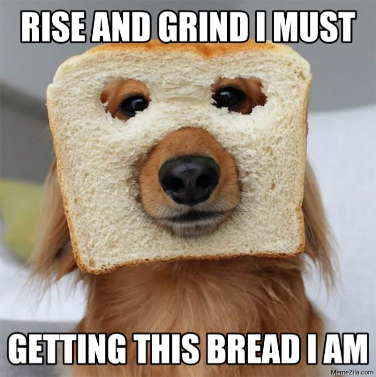 Rise And Grind Memes - MemeZila.com