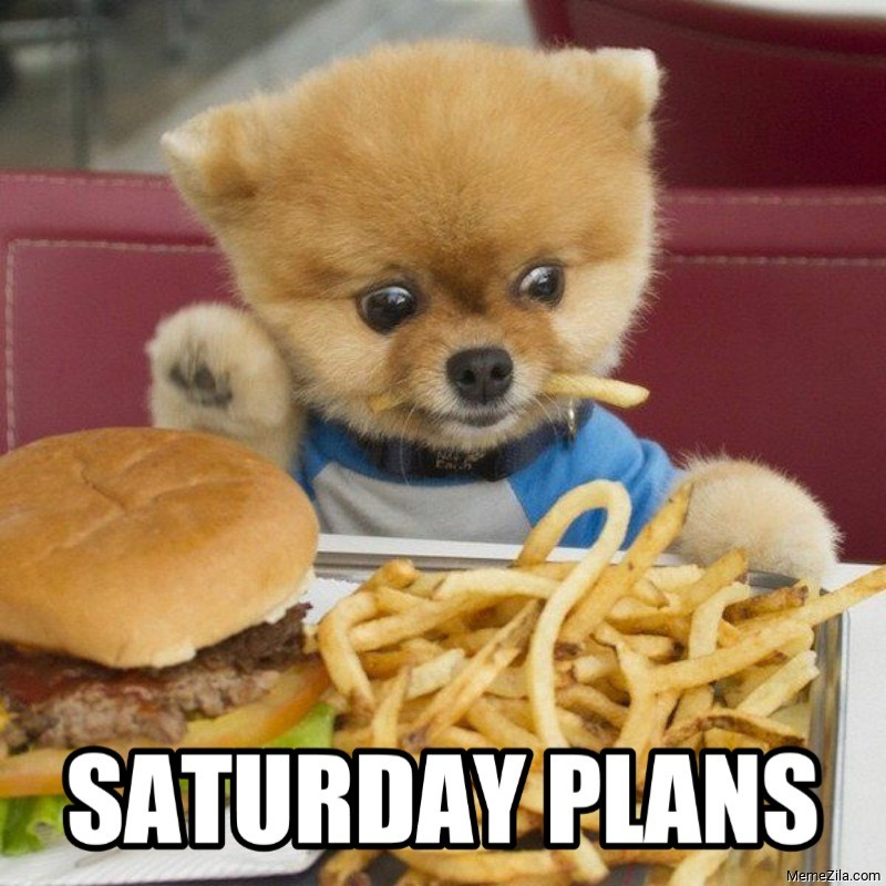 Saturday plans Dog meme