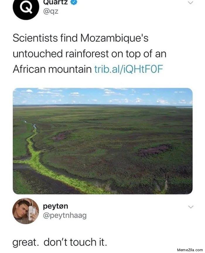 Scientists find Mozambiques untouched rainforest on the top of African mountain Great Dont touch it meme