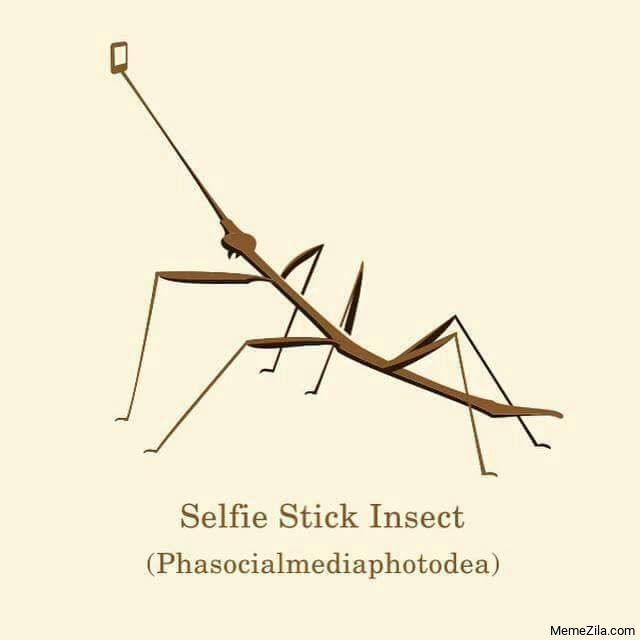 Selfie stick insect Phasocialmediaphotodea meme