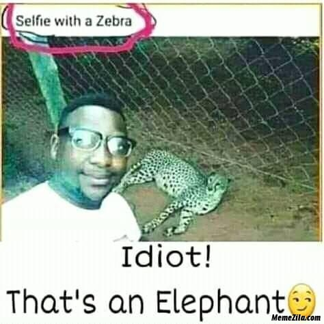Selfie with a zebra Idiot thats an elephant meme
