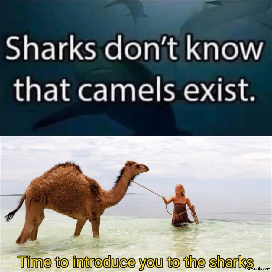 Shark don't know that camels exist Time to introduce you to the sharks meme