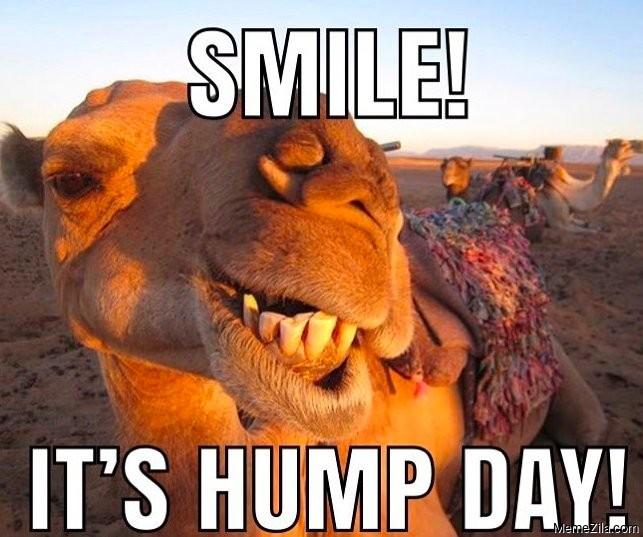 Smile Its hump day meme