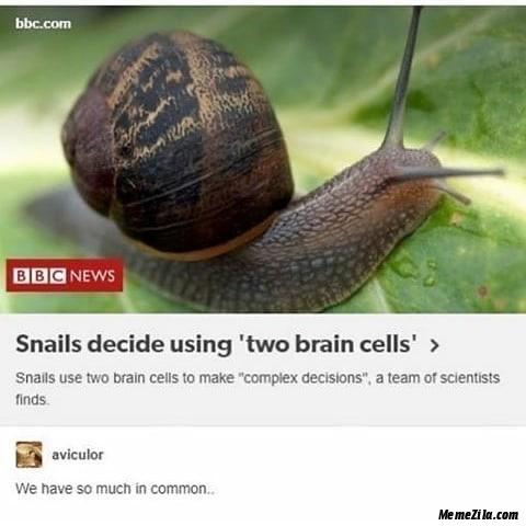Snails decide using two brain cells meme