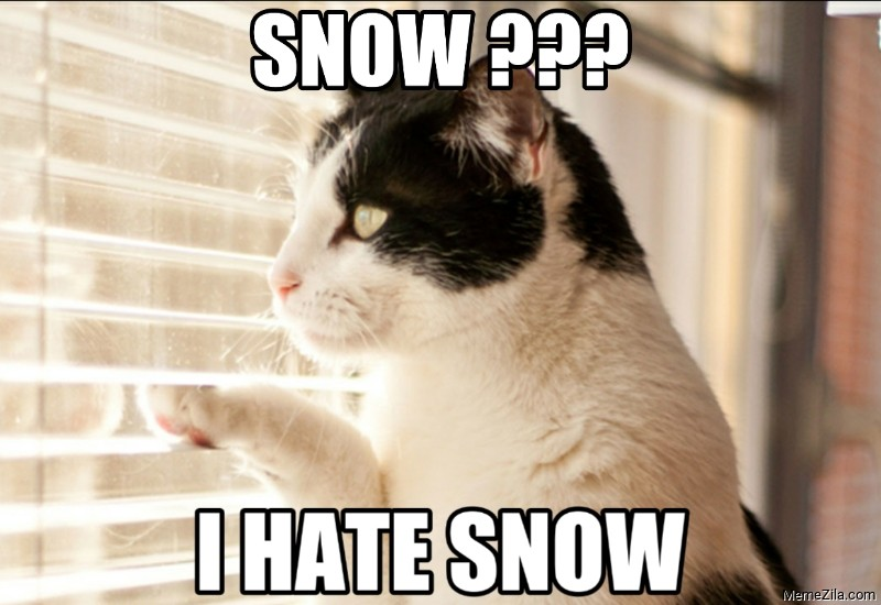 Snow I hate snow cat meme