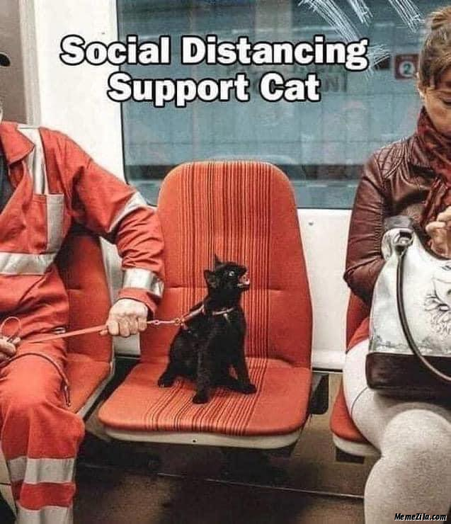Social distancing support cat meme