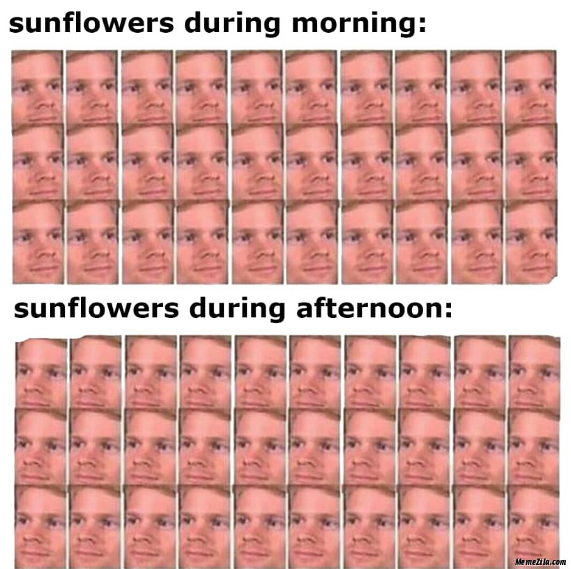 Sunflowers during morning vs Sunflowers during afternoon meme