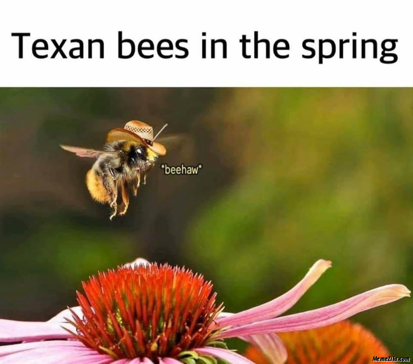 Texan bees in the spring Beehaw meme