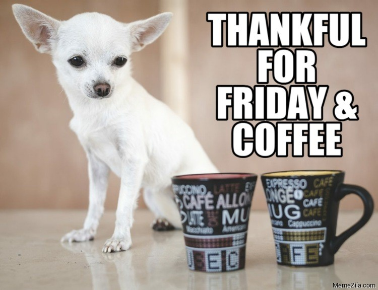 Thankful for friday and coffee dog meme