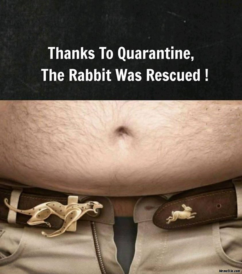 Thanks to quarantine The rabbit was rescued meme