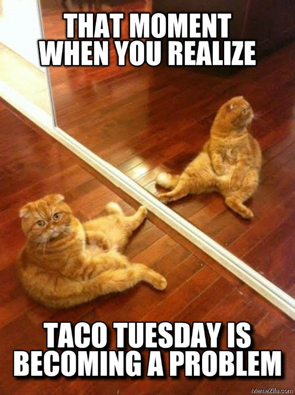 That moment when you realise taco tuesday is becoming a problem cat meme