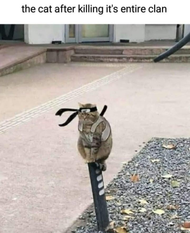 The cat after killing it's entire clan meme