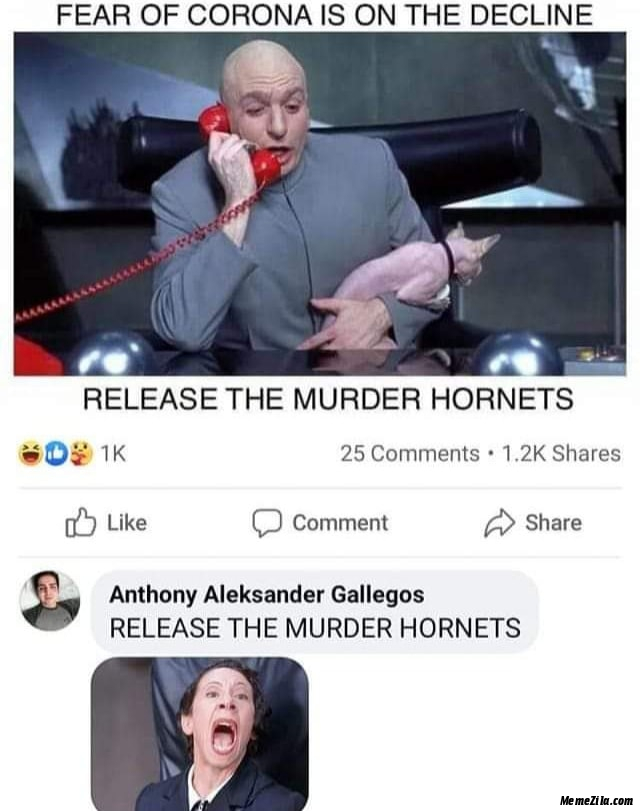 The fear of corona is on the decline Release the murder hornets meme