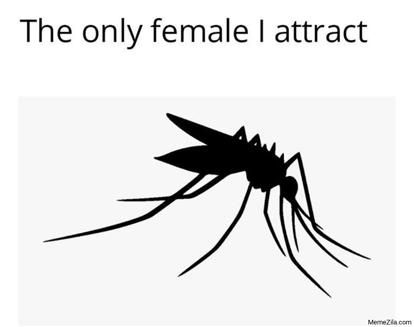 The only female I attract meme
