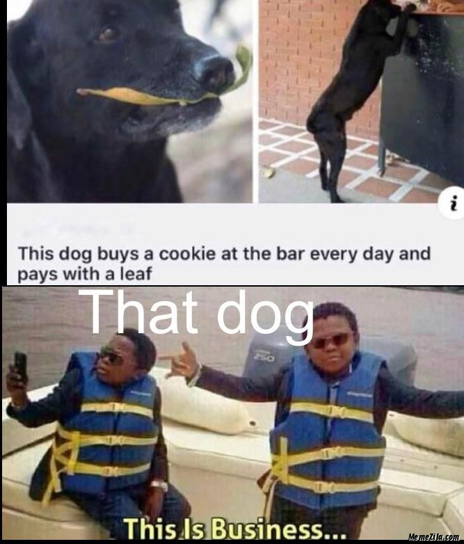 This dog bites a cookie at the bar everyday and pays with a leaf This is business meme