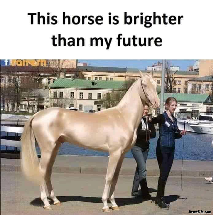 This horse is brighter than my future meme