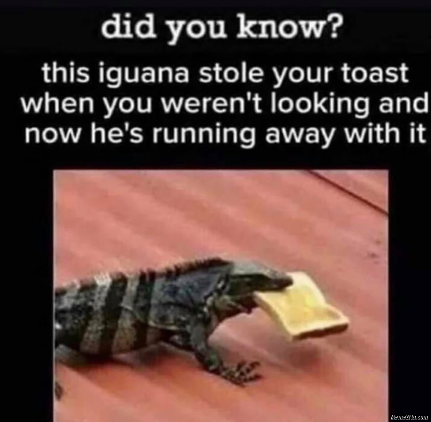 This iguana stole your post when you werent looking and now he is running away with it meme