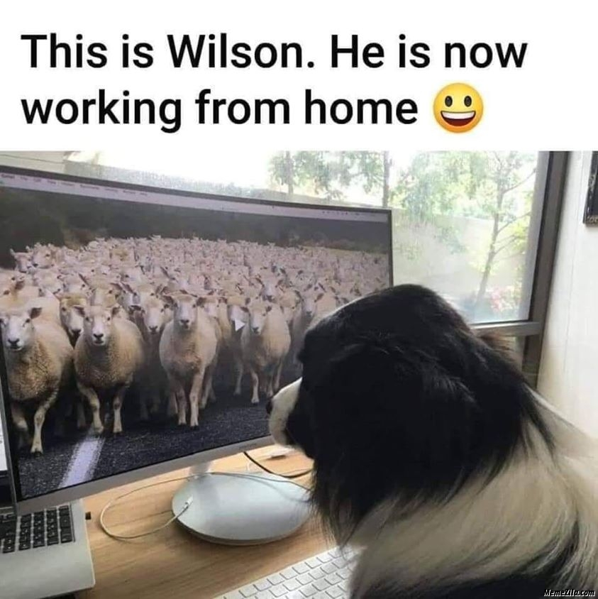 This is Wilson He is now working from home meme