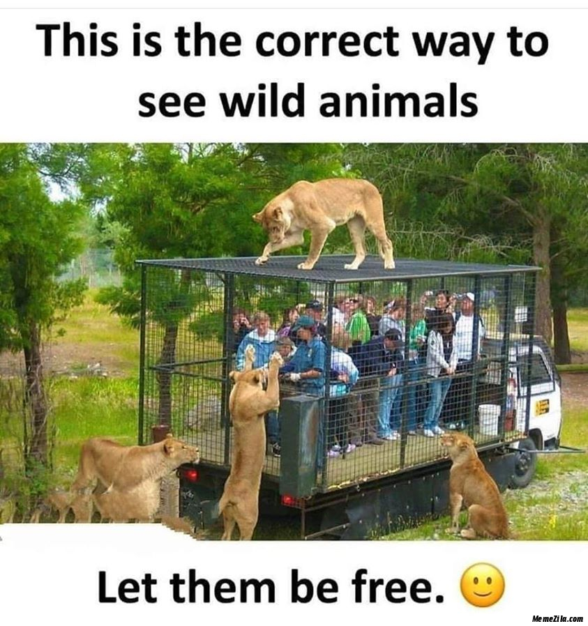 This is the correct way to see wild animals Lets them be free meme