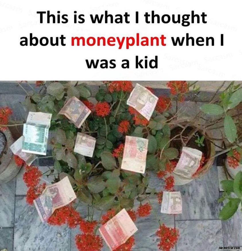 This is what I thought about moneyplant when I was a kid meme