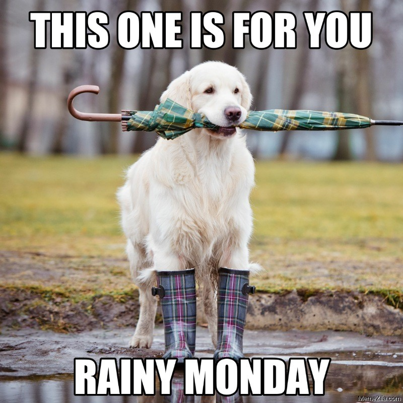 This one is for you Rainy monday dog meme