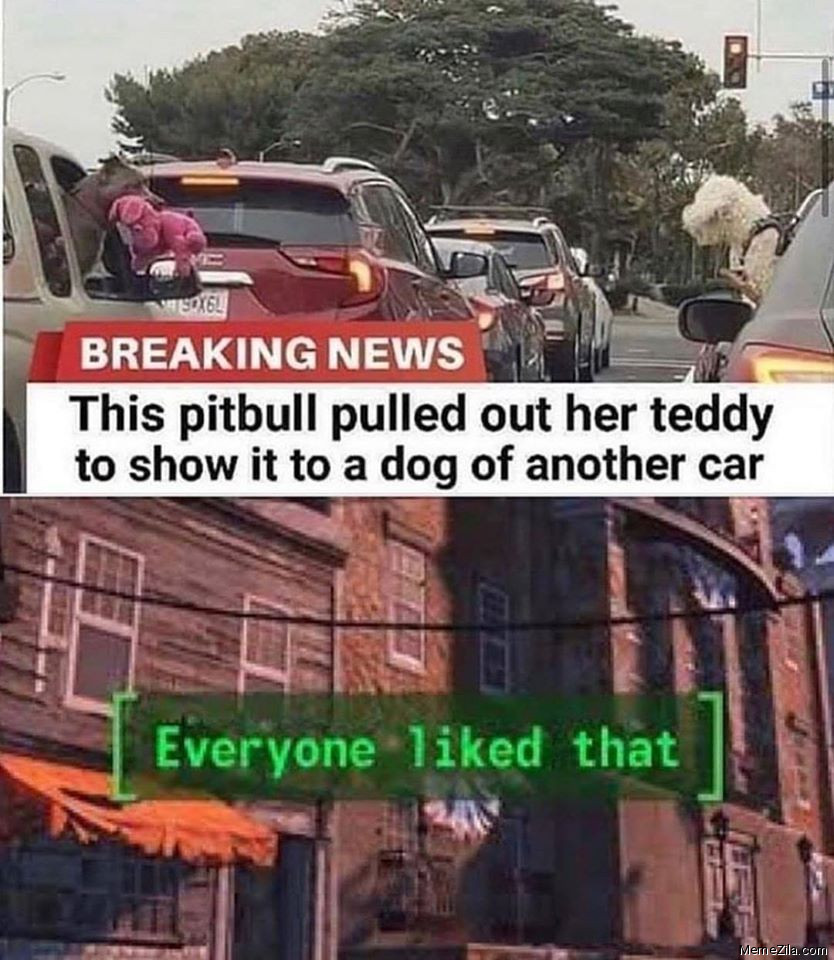 This pitbull pulled out her teddy to show it to show a dog of another car Everyone liked that meme