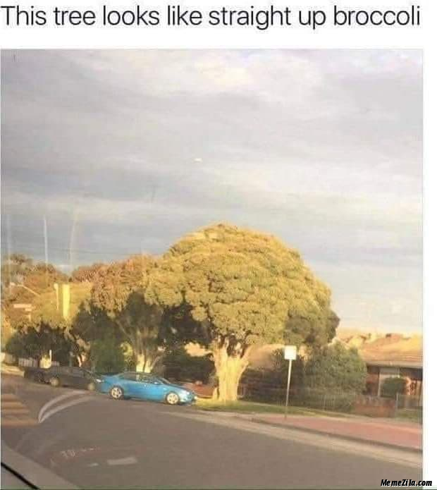 This tree looks like straight up broccoli meme