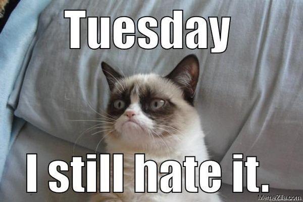 Tuesday I still hate it meme