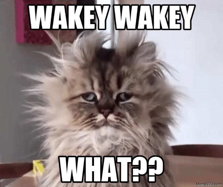 Wakey wakey what meme