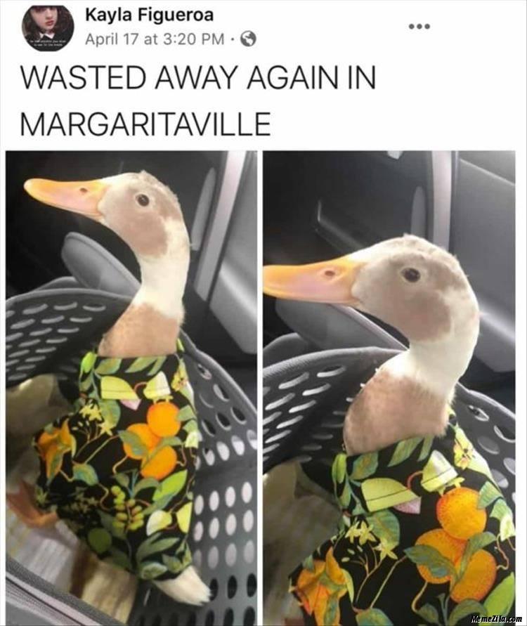 Wasted away again in margaritaville meme