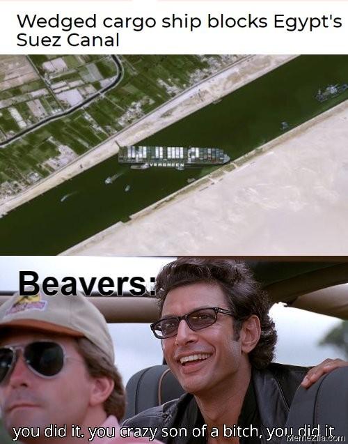 Wedged cargo ship blocks Egypts Suez canal Meanwhile beavers meme