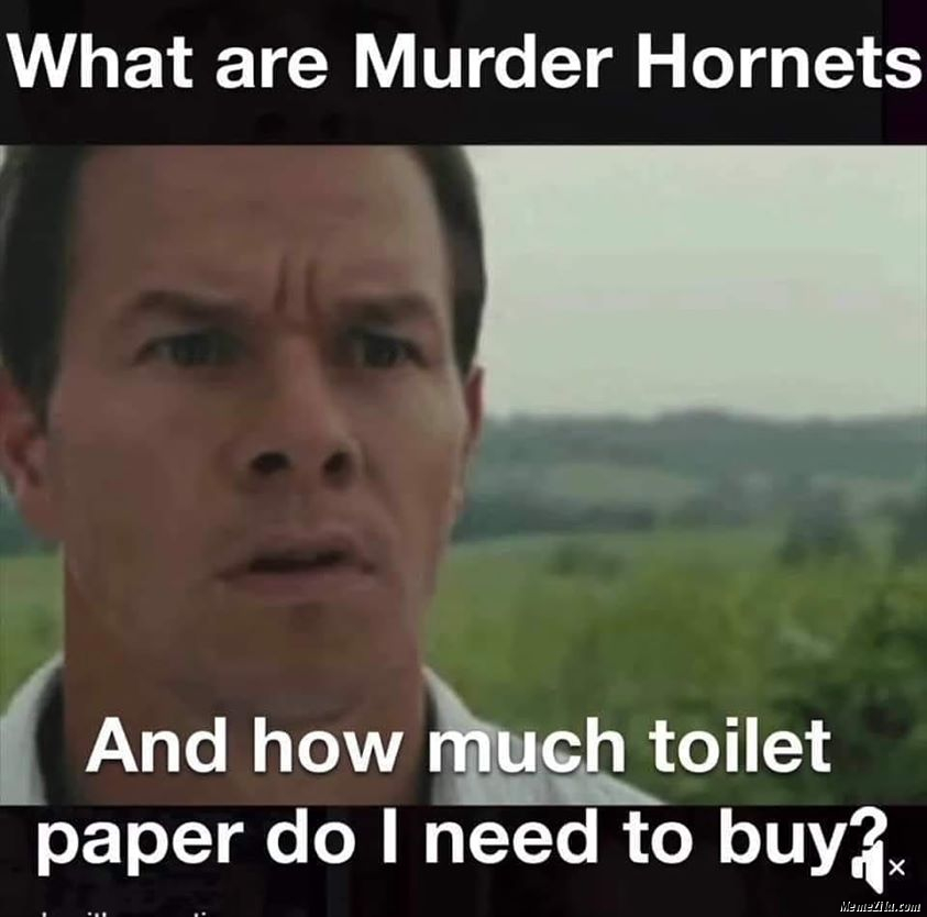 What are murder hornets And how much toilet paper do I need to buy meme