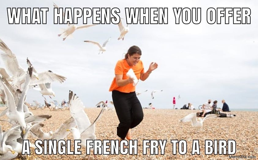 What happens when you offer a single french fry to a bird meme