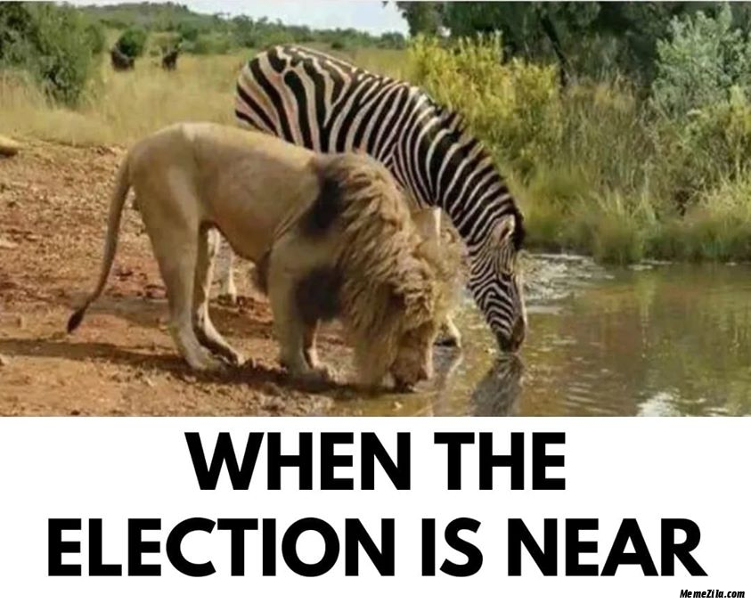 When the election is near meme