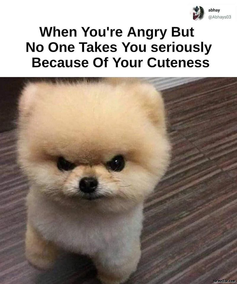 When you are angry but no one takes you seriously because of your cuteness meme