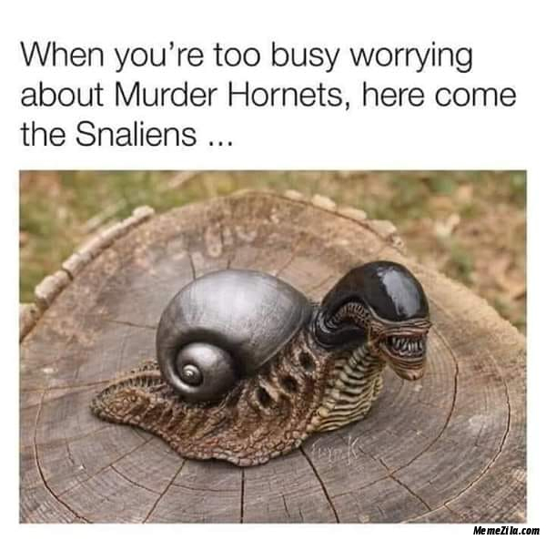 When you are too busy worrying about Murder hornets Here come the snaliens meme