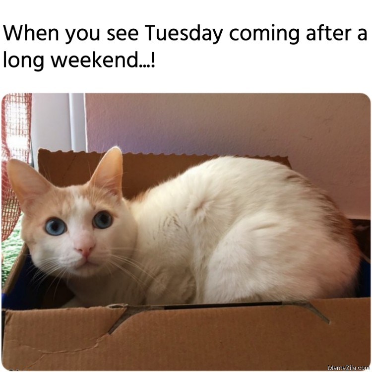 When you see Tuesday coming after a long weekend meme
