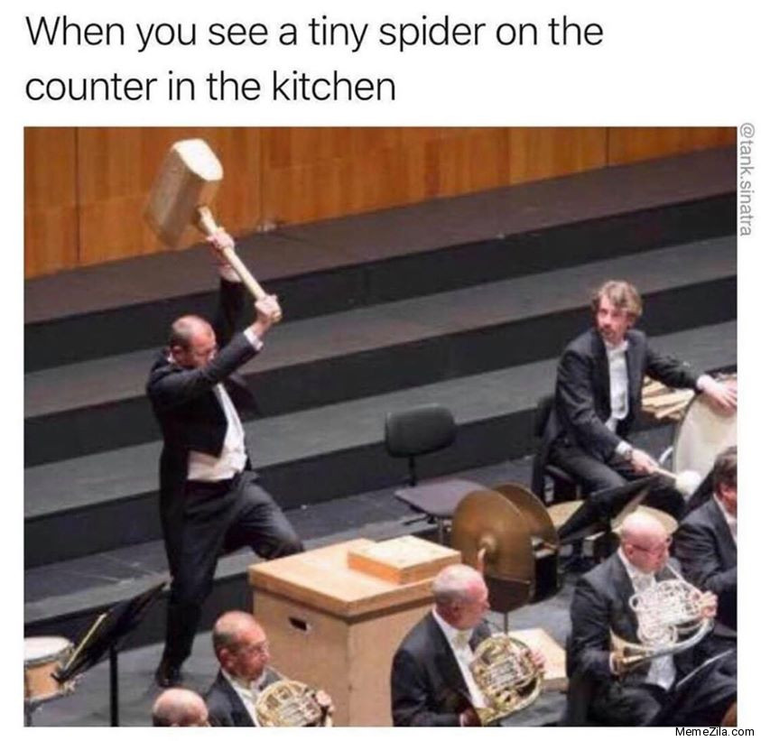 When you see a tiny spider on the counter in the kitchen meme
